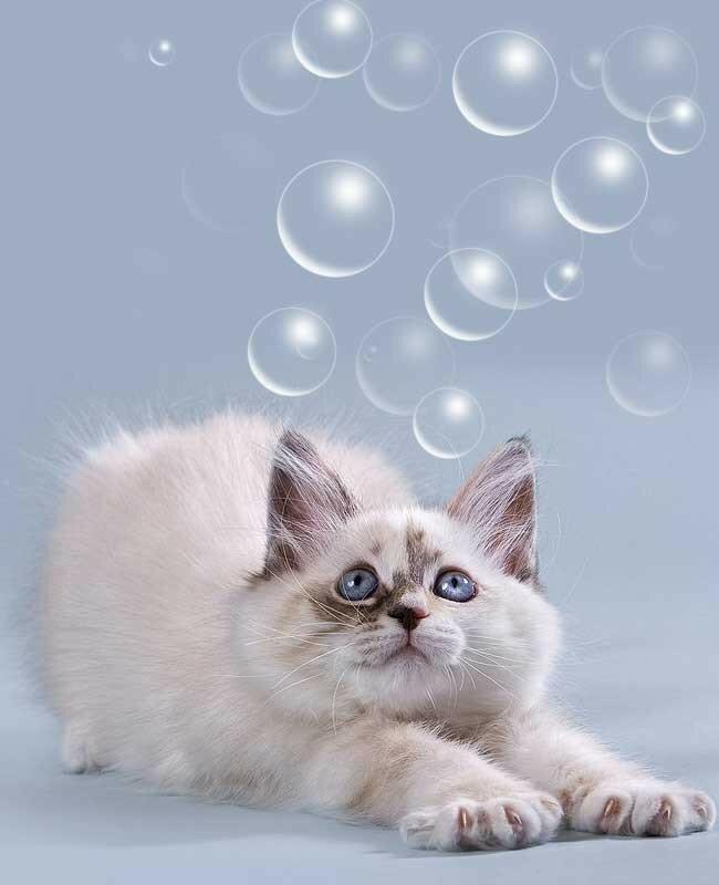 Фото котенка для урока фотошопа как сделать кисть.